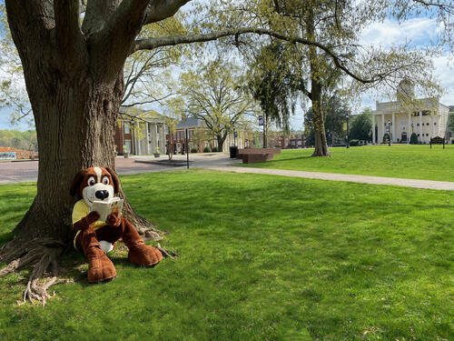 Bernie reading a book on campus